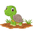 cartoon baturtle in field vector image vector image