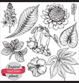 collection hand drawn tropical flowers vector image vector image
