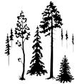 Coniferous vector image