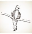 Sketch of turtle dove bird vector image vector image