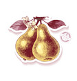 sticker with hand drawn pear branch vector image vector image