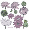 water lily set of vector image vector image