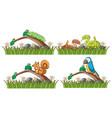 four types animals in garden vector image vector image