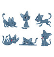 little kittens cats domestic cute and funny vector image
