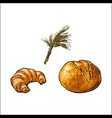sketch white bread croissant wheat ears set vector image