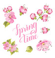 spring card with sakura flowers vector image vector image