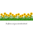sunflowers and grass decoration element vector image