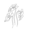 abstract one line art elephant ears leaves vector image