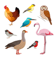 Colorful realistic bird collection vector image vector image