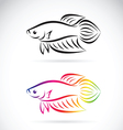 Fighting fish vector image