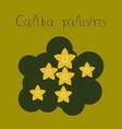 flat stylish background plant caltha vector image