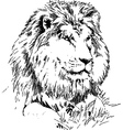 Lion lying on grass hand drawing black on white