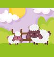 sheep wooden fence grass sky farm animals vector image vector image