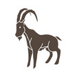 ibex standing graphic vector image vector image