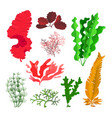 seaweeds and coral reef underwater collection vector image