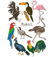 Set of isolated birds vector image vector image