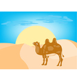 camel desert vector image vector image