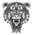original black head tiger drawing with opened vector image