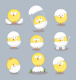 set from chicken in shell on white background vector image vector image