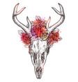 sketch deer skull with flowers wreath vector image