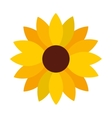 sunflower decoration isolated icon vector image