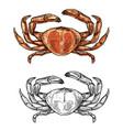 crab sketch seafood menu and sea fishing vector image vector image