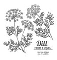 dill plant set vector image vector image
