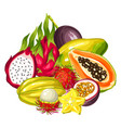 exotic tropical fruits collection of vector image vector image