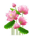 realistic bunch lotus flowers vector image
