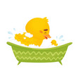 cute duckling bathes in bath