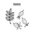 berry hand drawn collection dogrose vector image vector image