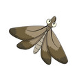 cartoon moth insect isolated on white background vector image