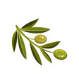 flat icon of small branch with green olives vector image vector image