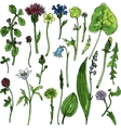Set of watercolor drawing herbs and flowers vector image vector image