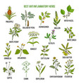 best anti-inflammatory herbs set vector image vector image