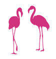 flamingo exotic bird two pink flamingo vector image