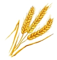 Ears of wheat hand drawn vector image