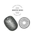hand drawn sketch style kiwi organic fresh food vector image