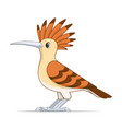 red hoopoe bird on a white background vector image vector image