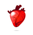 isolated engraving colorful red human heart vector image