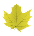 maple leaf isolated on white background vector image vector image