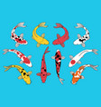 types koi fishes vector image