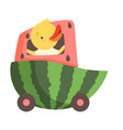 cute chicken riding car made watermelon funny vector image vector image