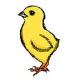 little cute chicken vector image