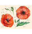 red poppy papaver rheas hand drawn vector image