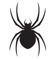 spider design vector image vector image