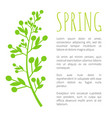 spring and weed grass on poster with sample text vector image