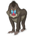 Baboon vector image vector image