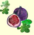 figs polygon vector image vector image