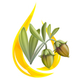 jojoba oil vector image vector image